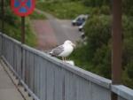 norwegen2013-tag12_022