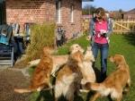 Hundetreffen - 10.04.2011