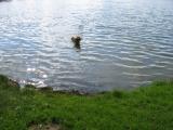 Regelmäßige Spatziergänge, hat Rocky unter anderem für das Baden genutzt.